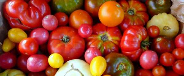 selbsternte-vielfalt-600x250-crop-35-39.jpg