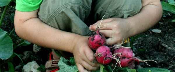 selbsternte-selbsternte-radieschen-600x250-crop-54-44.jpg