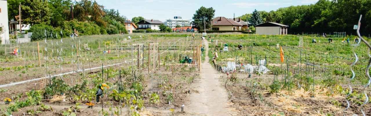 selbsternte-biohof-radl-satzingerweg-3-1280x400-crop-49-51.jpg