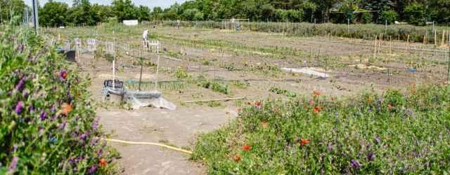 selbsternte-biohof-radl-odenburgerstr-1-640x250-crop-49-59.jpg