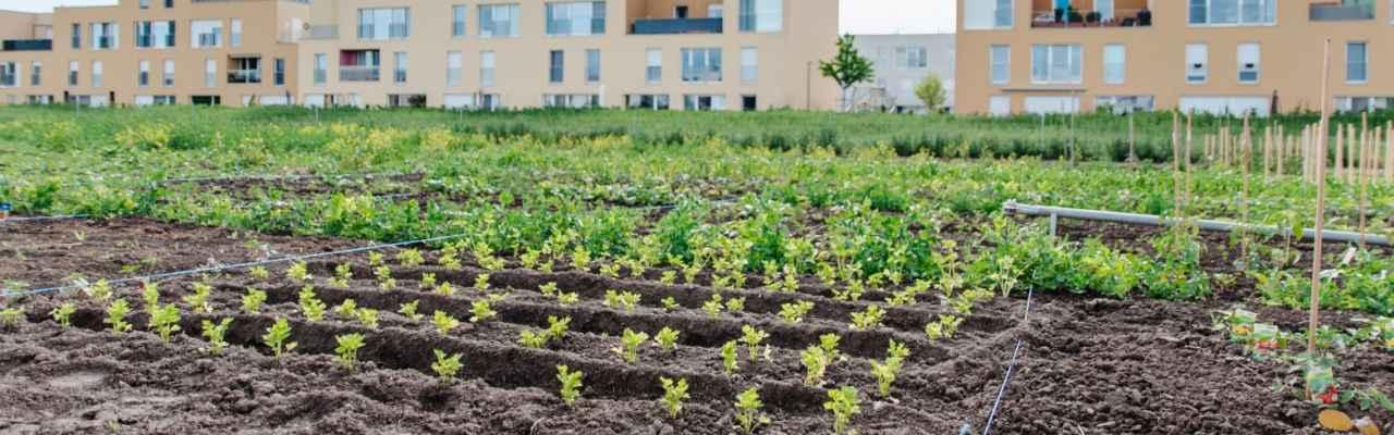 selbsternte-biohof-radl-pelargonienweg-14-1280x400-crop-54-61.jpg