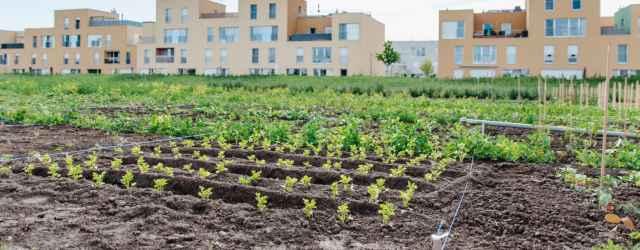 selbsternte-biohof-radl-pelargonienweg-14-640x250-crop-54-61.jpg
