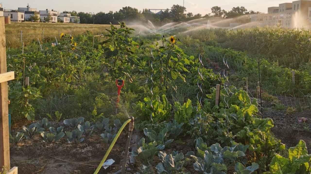 selbsternte-biohof-radl-image00002-1280x720-crop-49-61.jpg