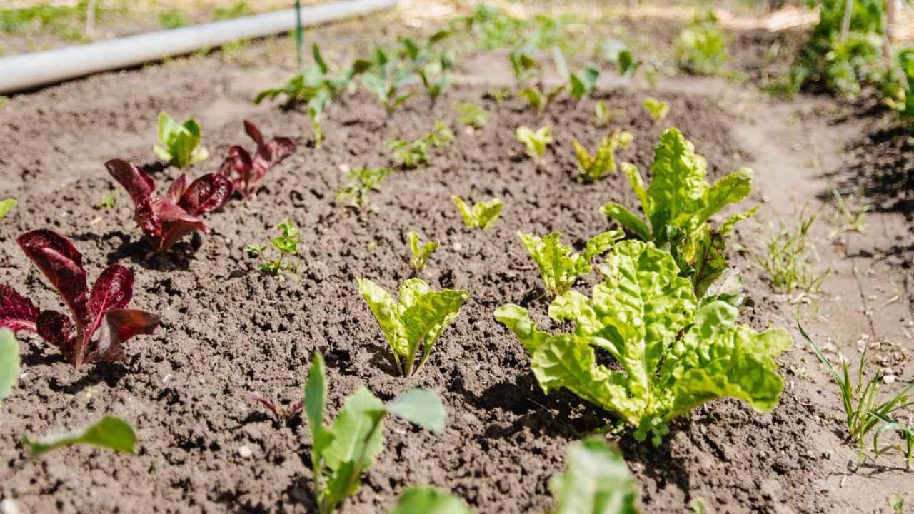 selbsternte-biohof-radl-parzelle-1280x720-crop-50-75.jpg