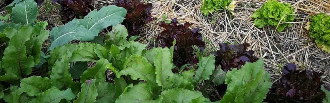 selbsternte-biohof-radl-selbsternte-radl-img-20180615-191145-1280x400-crop-48-79.jpg