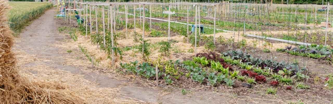 selbsternte-biohof-radl-sussenbrunnerstr-1-1280x400-crop-49-69.jpg