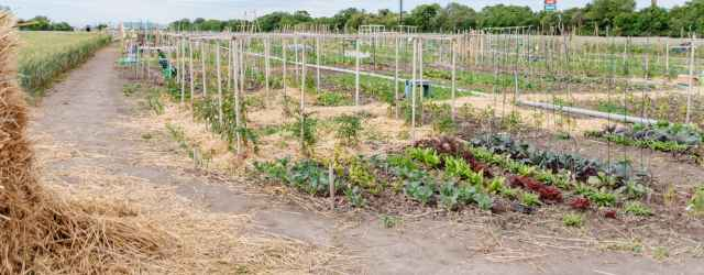 selbsternte-biohof-radl-sussenbrunnerstr-1-640x250-crop-49-69.jpg