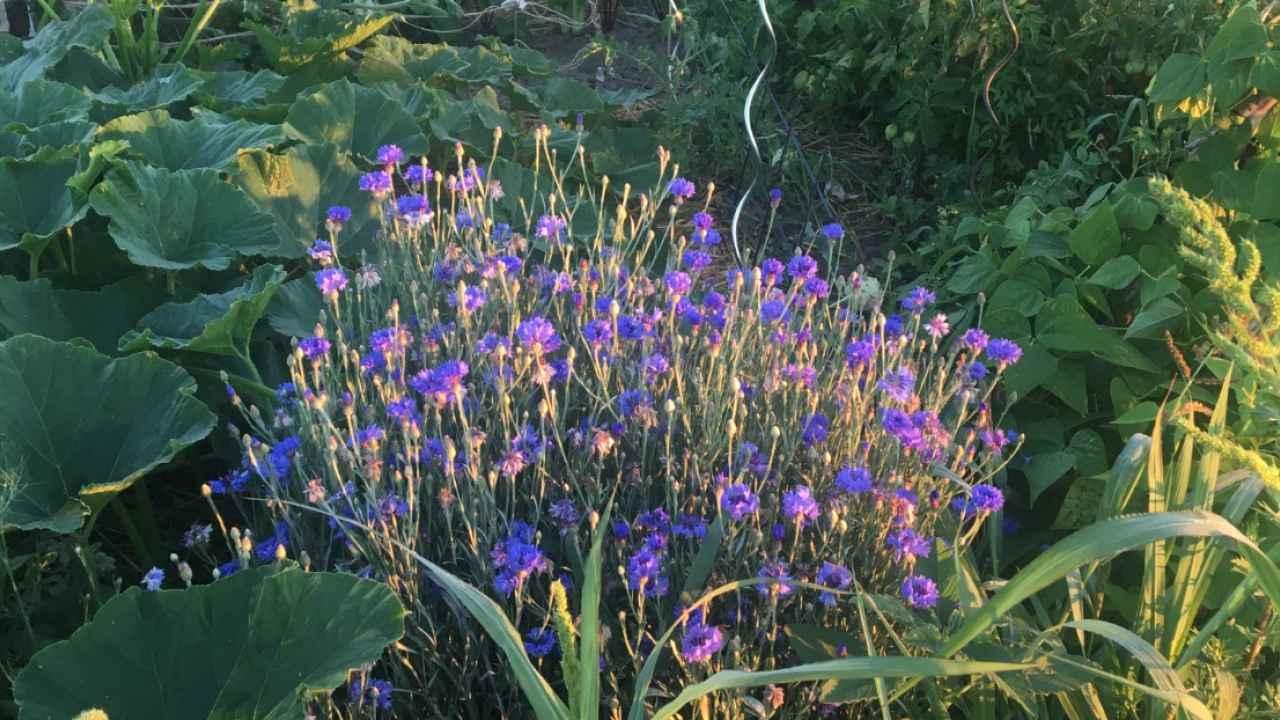 selbsternte-biohof-radl-su2-1280x720-crop-52-58.jpg