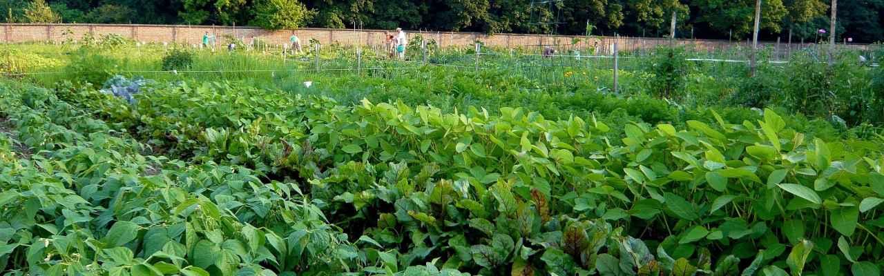 selbsternte-maria-enzersdorffeld-modling-1280x400-crop-50-50.jpg